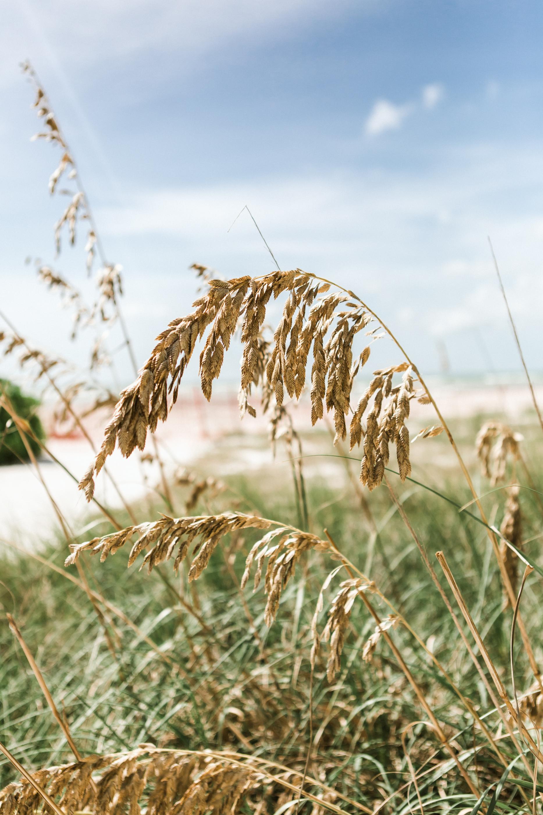 Sea oats destination beach wedding conservation longboat key club