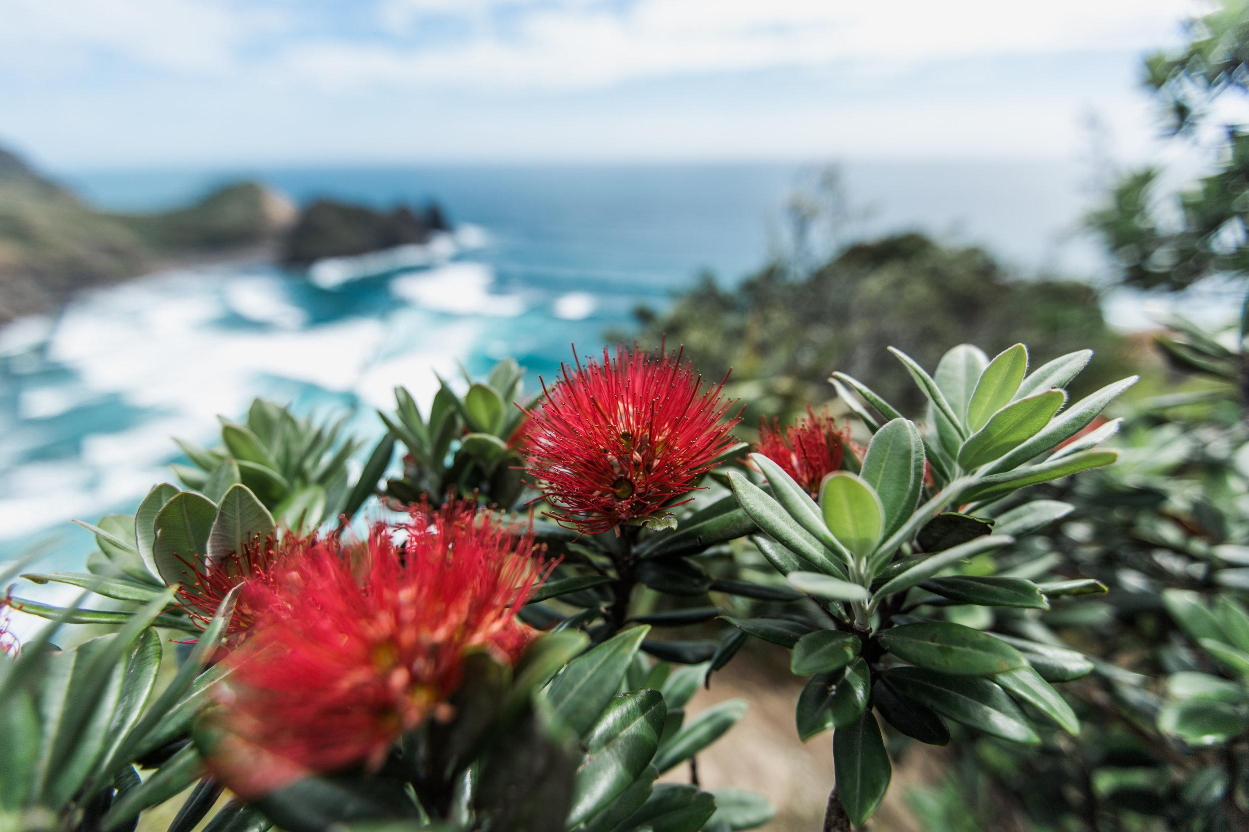 New Zealand Travel Adventure Christmas Joshua Shaina 1.jpg