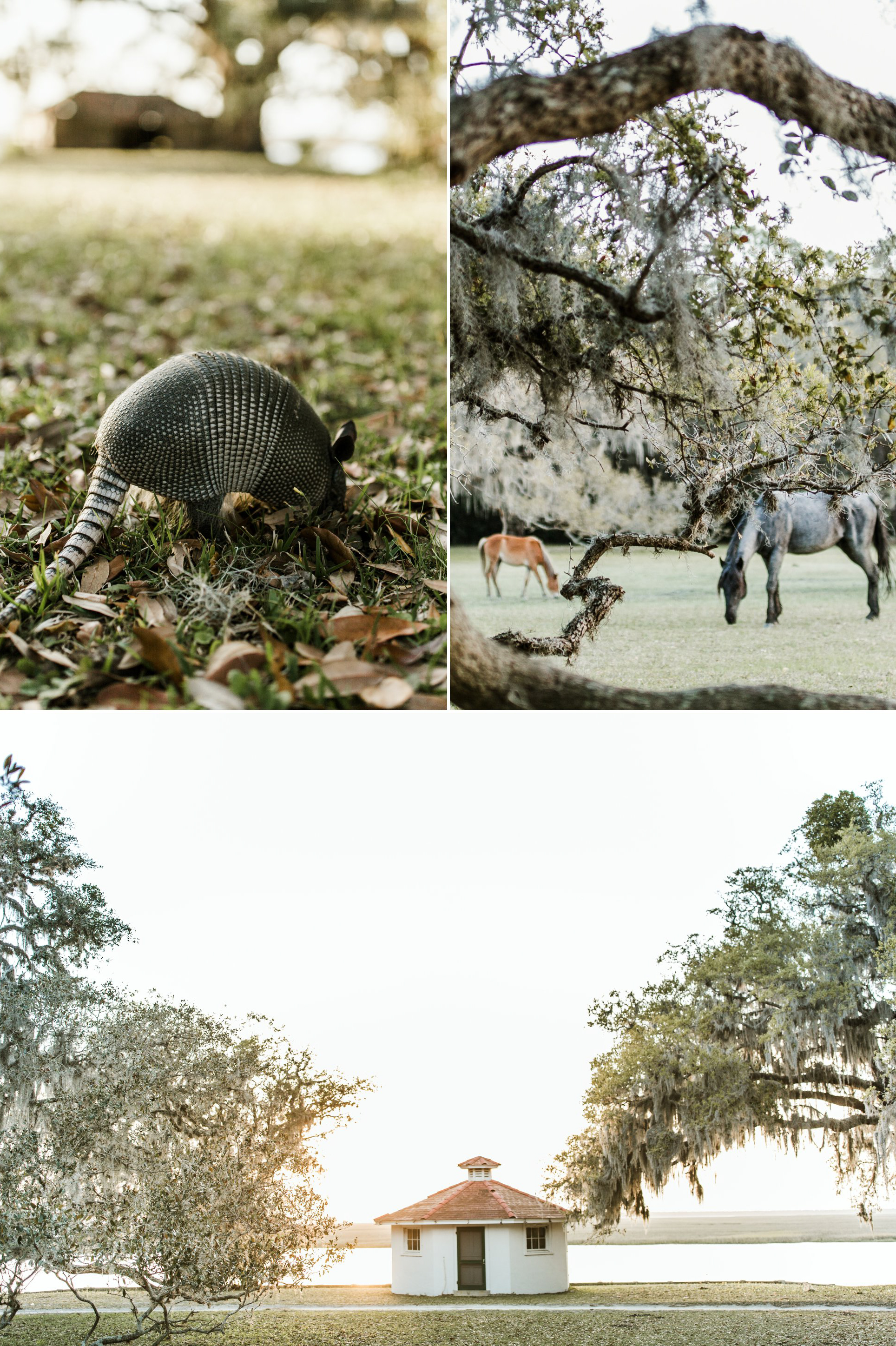 outdoor backpacking adventure photography- Cumberland Island National Seashore 2017 039.jpg