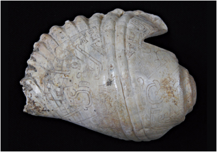Ancient biotechnology: seashell horns