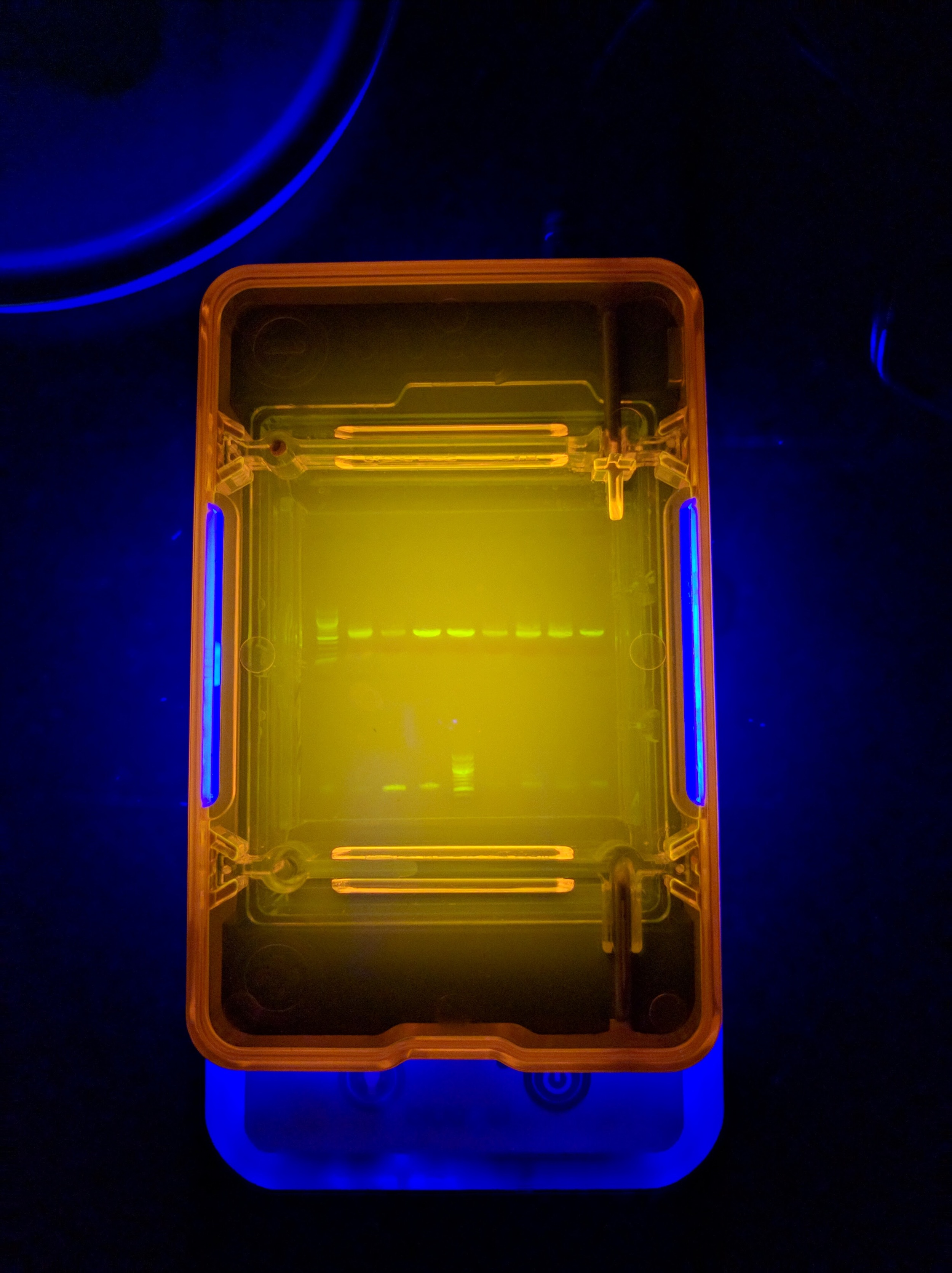 PCR successful!