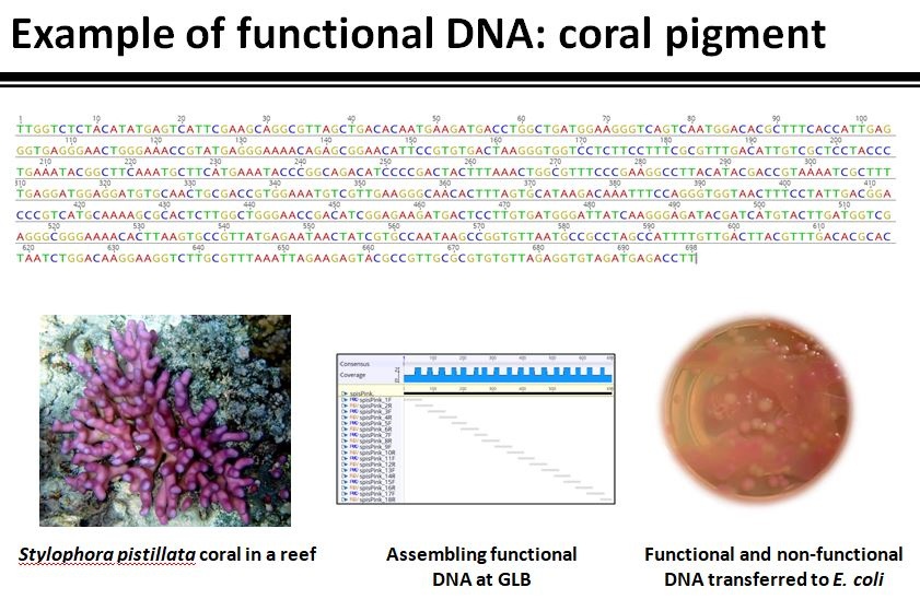 Functional DNA from coral