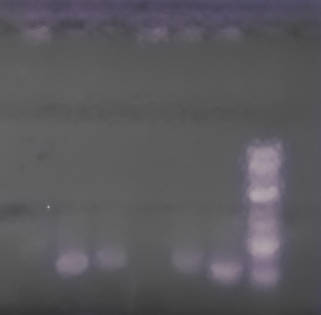 Group1 PCR