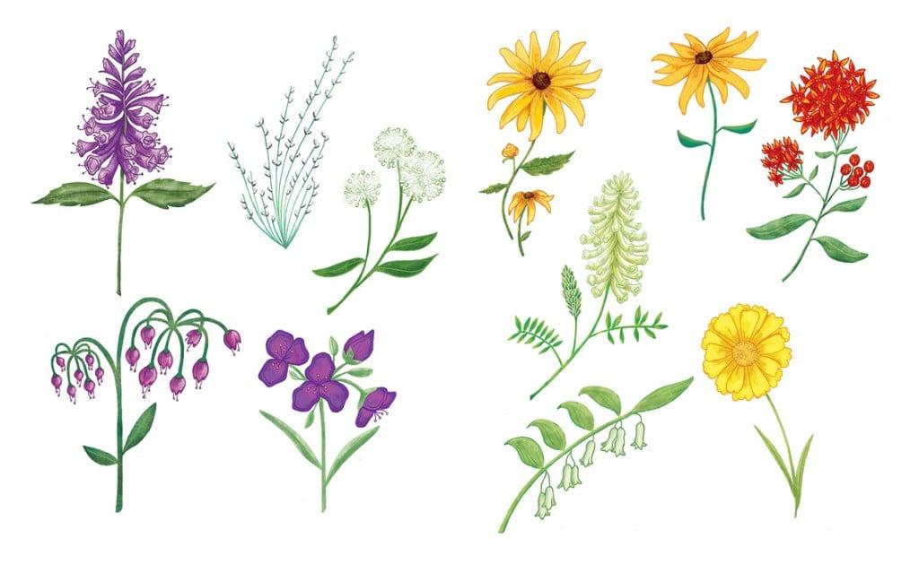 WIldflowersA