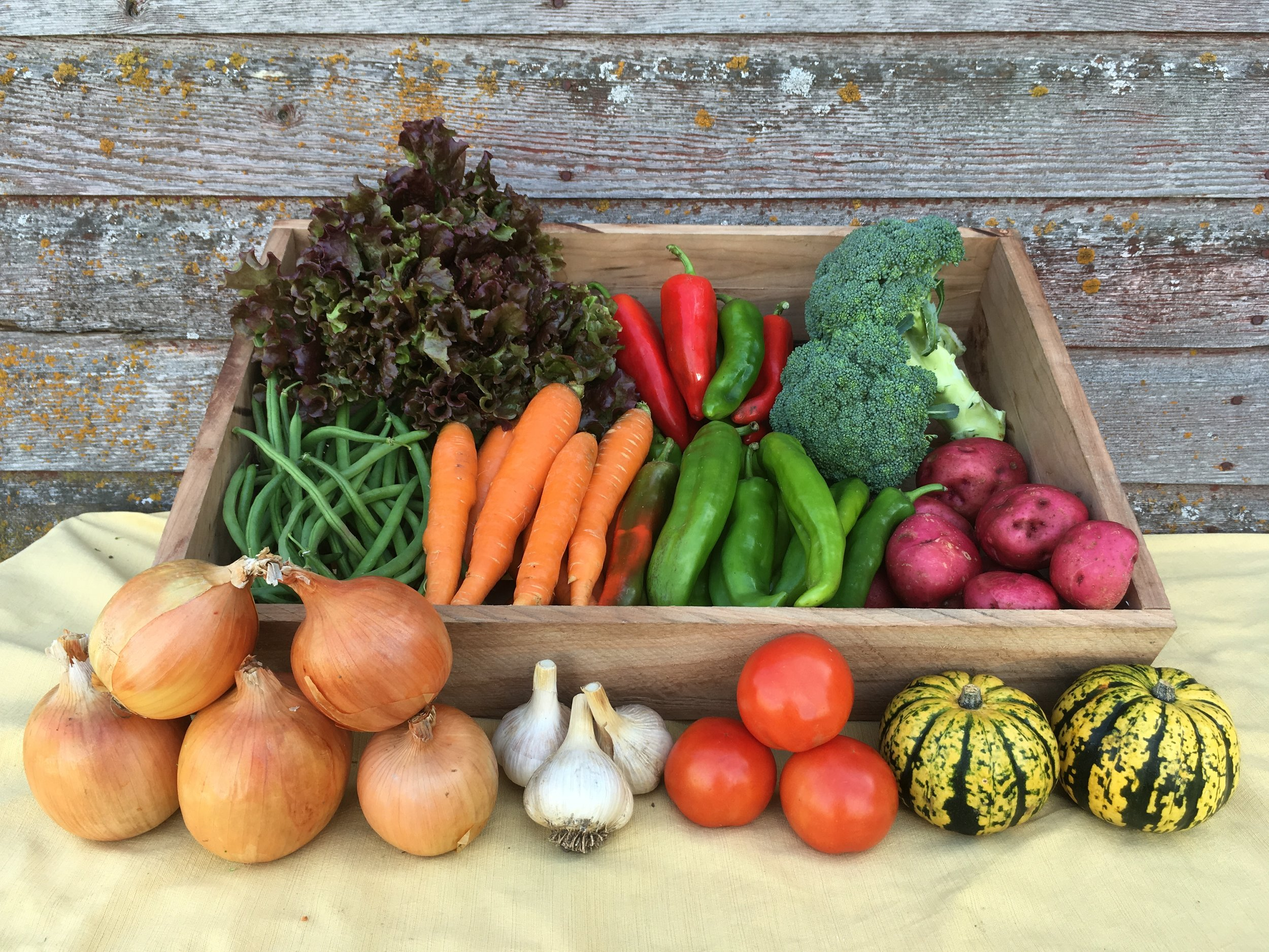 Click here for more information on our CSA box program