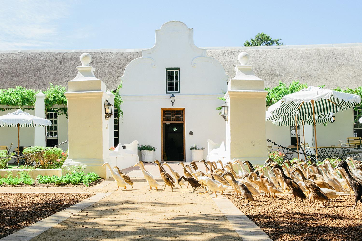 vergenoegd wine estate