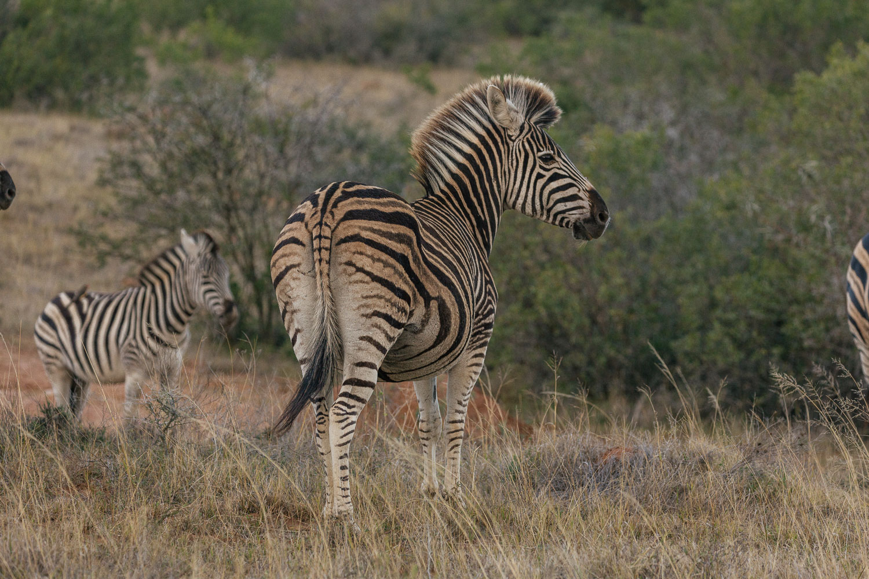 Visiting Shamwari in the Eastern Cape
