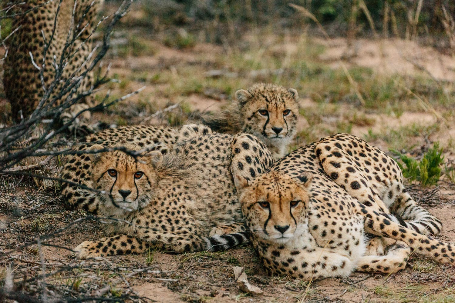 20 Photographs that will inspire you to visit African bush!