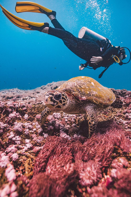 Diving Bali - Nusa Pinada