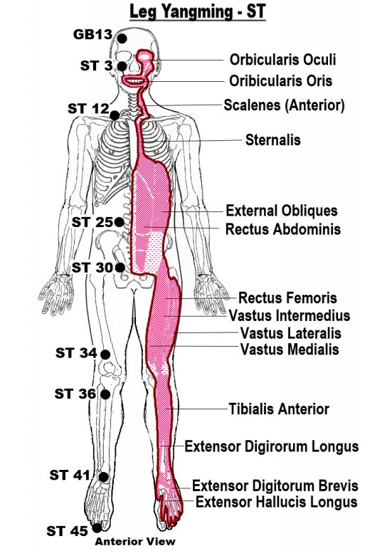 Sinew Image Credit: Sinews Channels Acupuncture Chart by: Luca Moschini