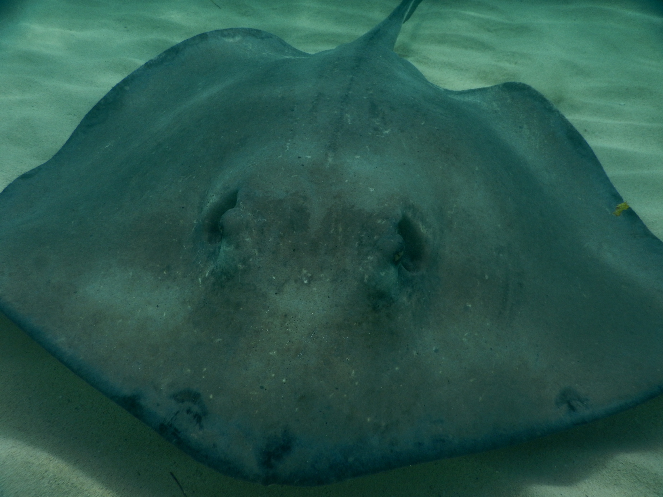 sting ray healing energy