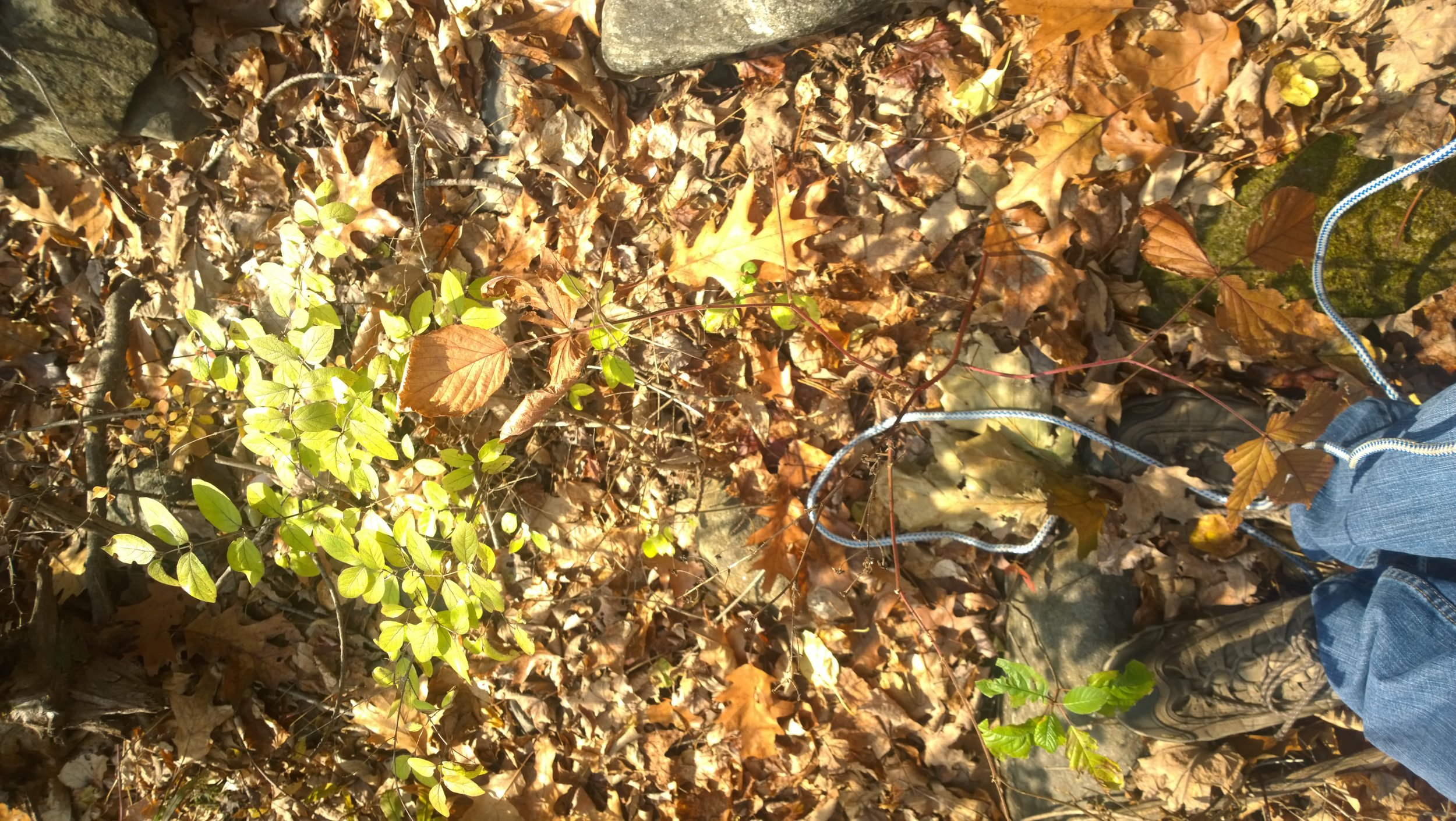 Feet of Zachary Melisi '17, surveying Franklin sites for his invasive species recommendation plan.