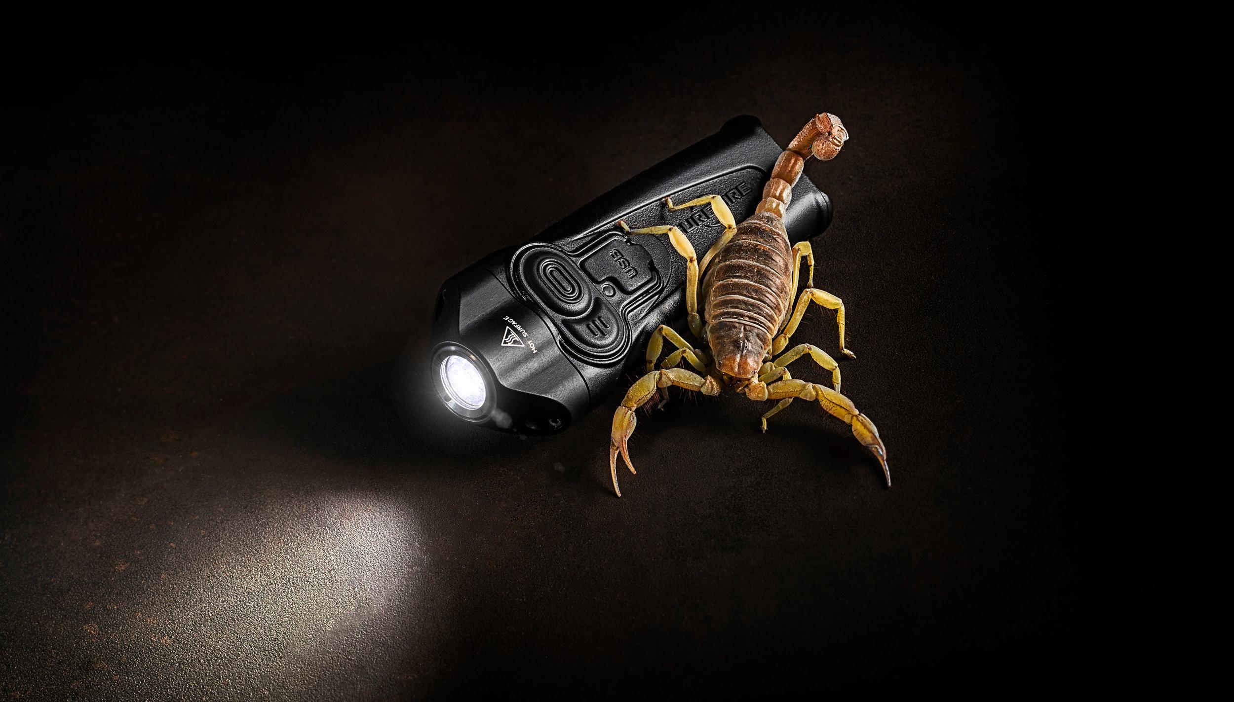 SF-scorpion.jpg