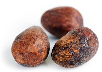 Shea Tree Fruit