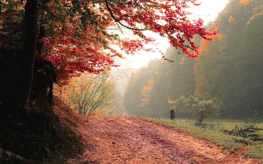 autumn-daylight-fall-589841.jpg