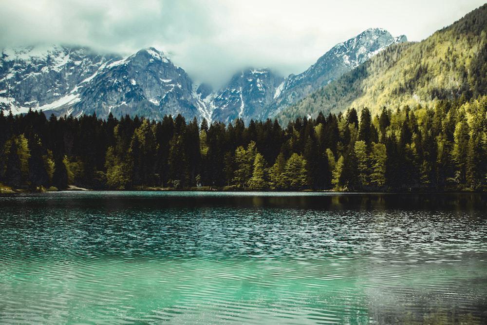conifers-environment-fir-trees-1034568.jpg