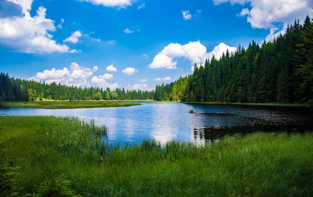 daylight-forest-grass-247600.jpg