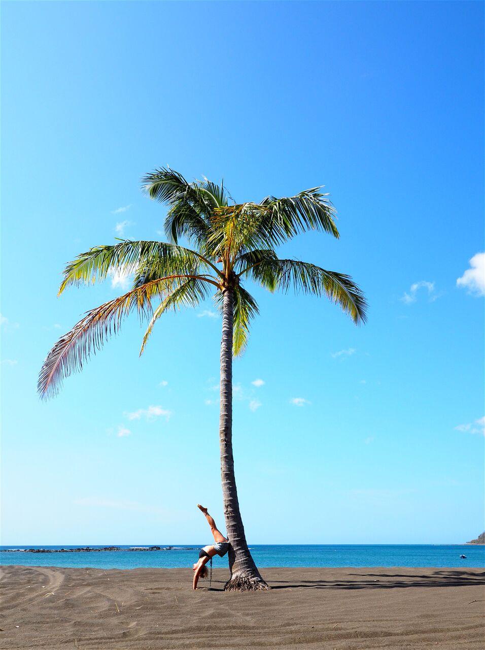 yoga palm.jpg