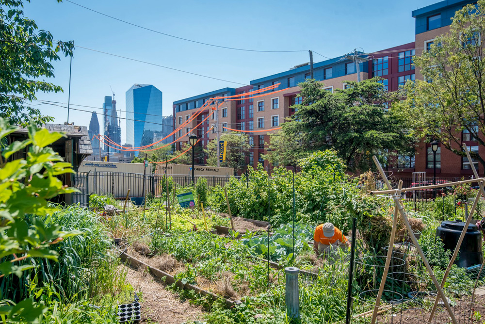 Summer Winter Community Garden, image courtesy of  NGT