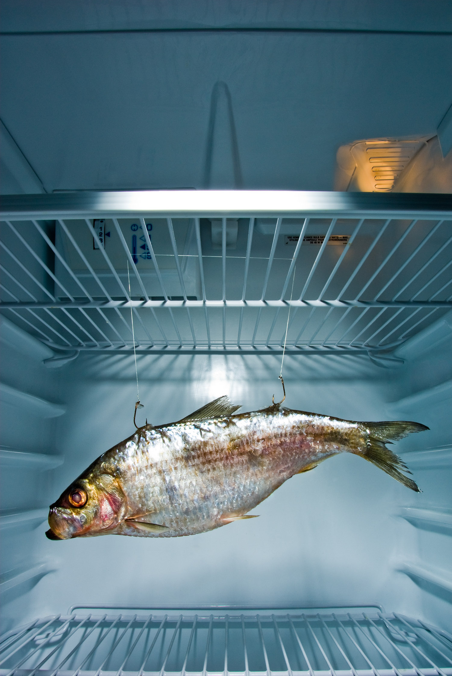 Fish in Fridge