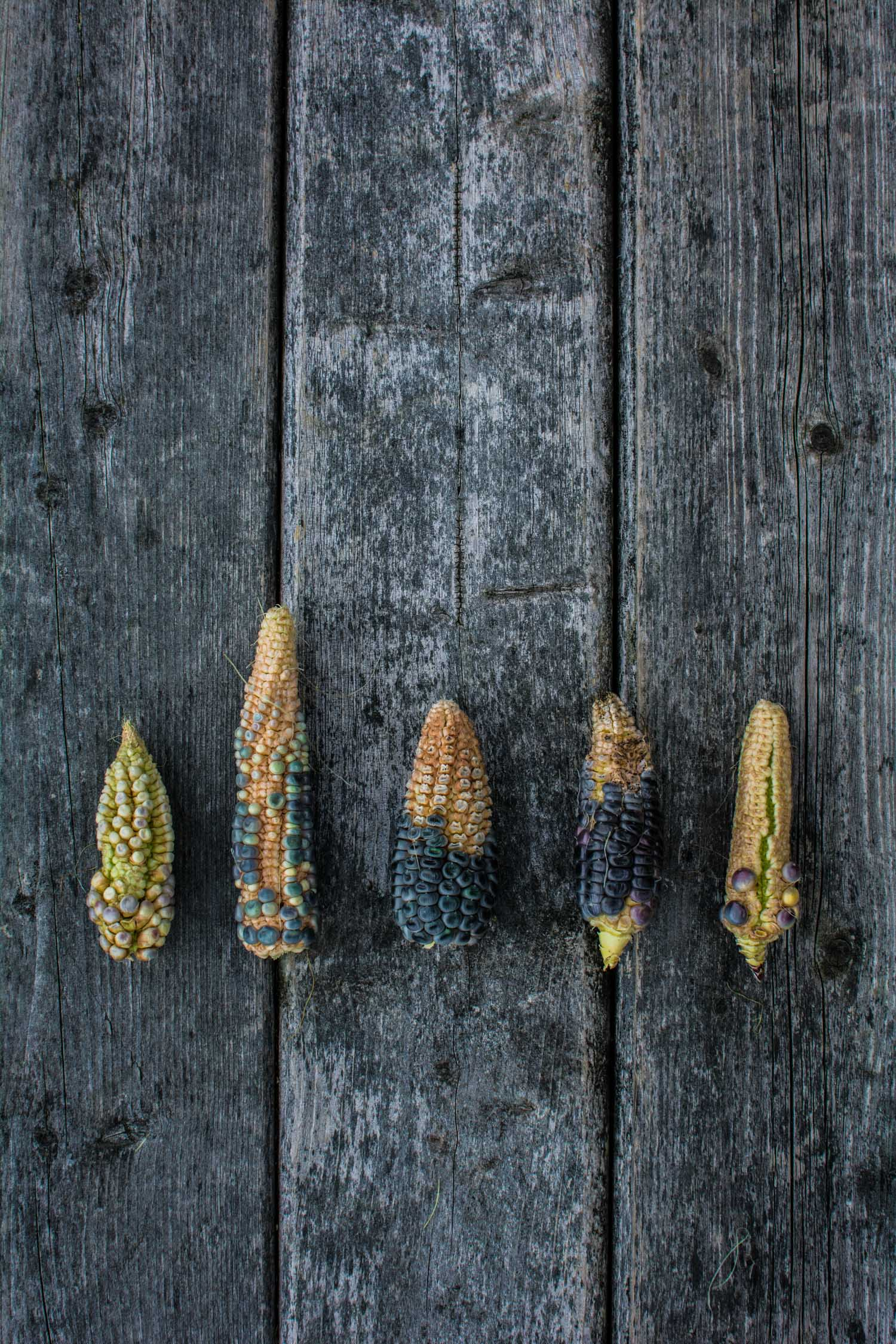 Black, Blue and Yellow Corn