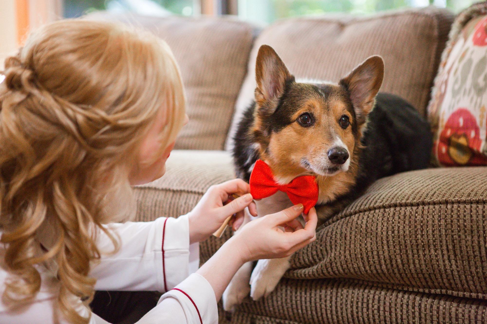 Dr. Lauren with her faithful companion, Cubby the Corgie.