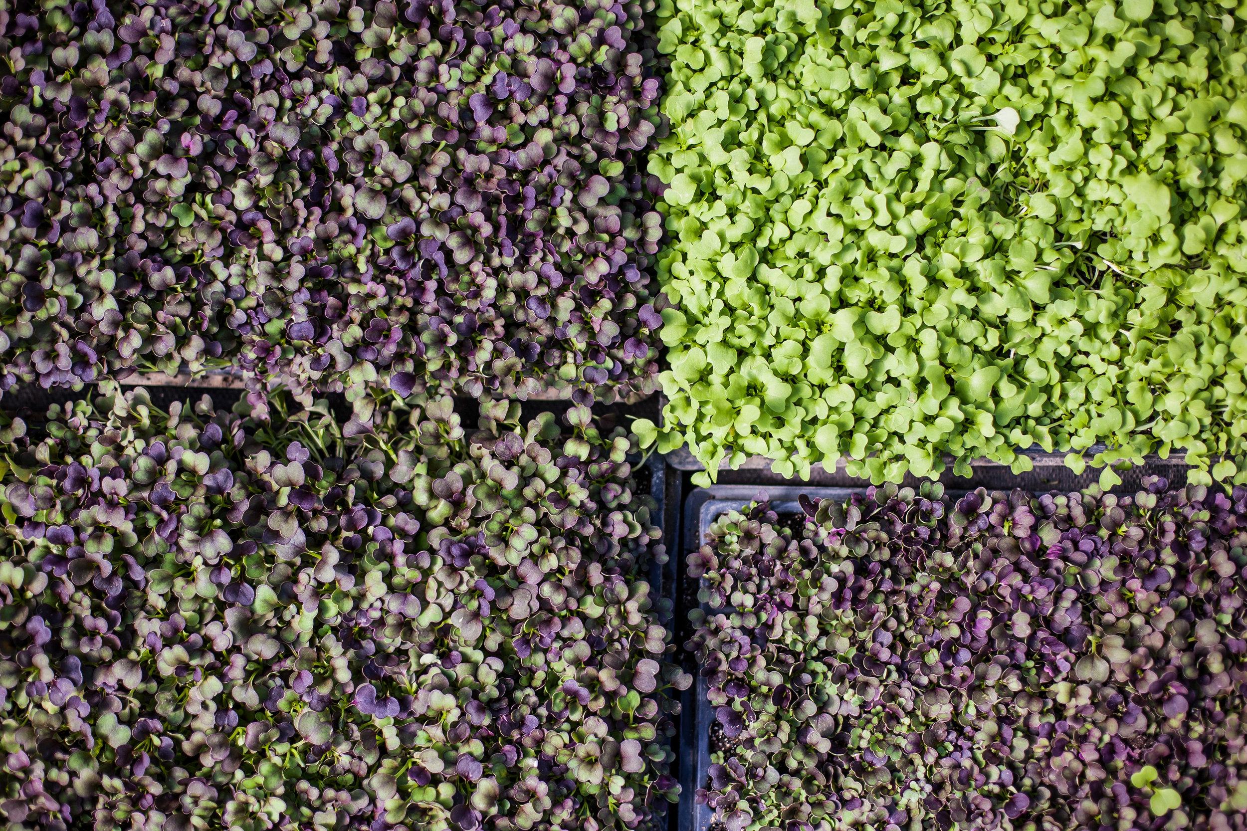 Female Farmer Project _ AudraMulkern1.jpg