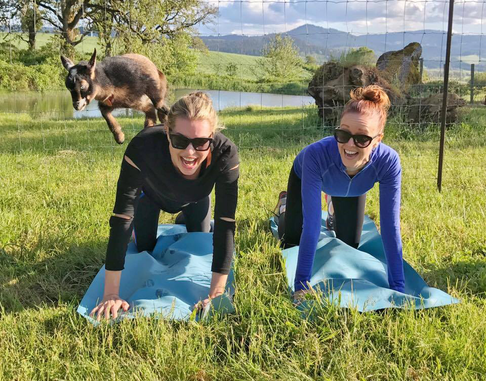 image courtesy of Goat Yoga