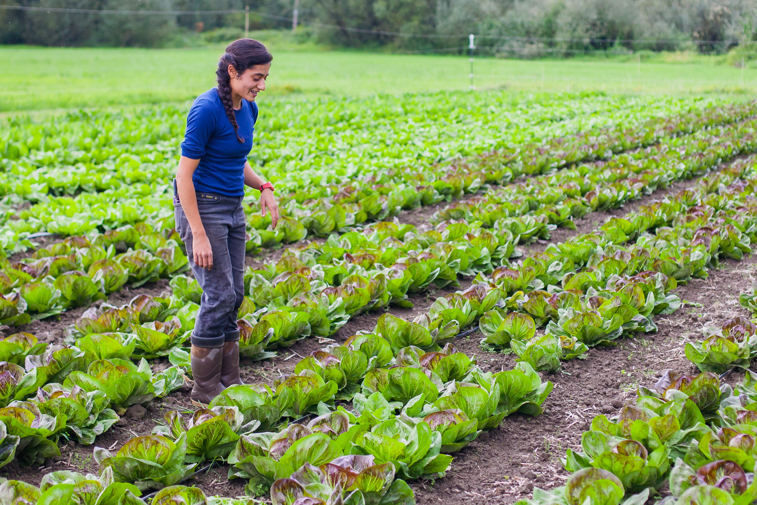 The Greenhorn One Leaf Farm The Female Farmer Project