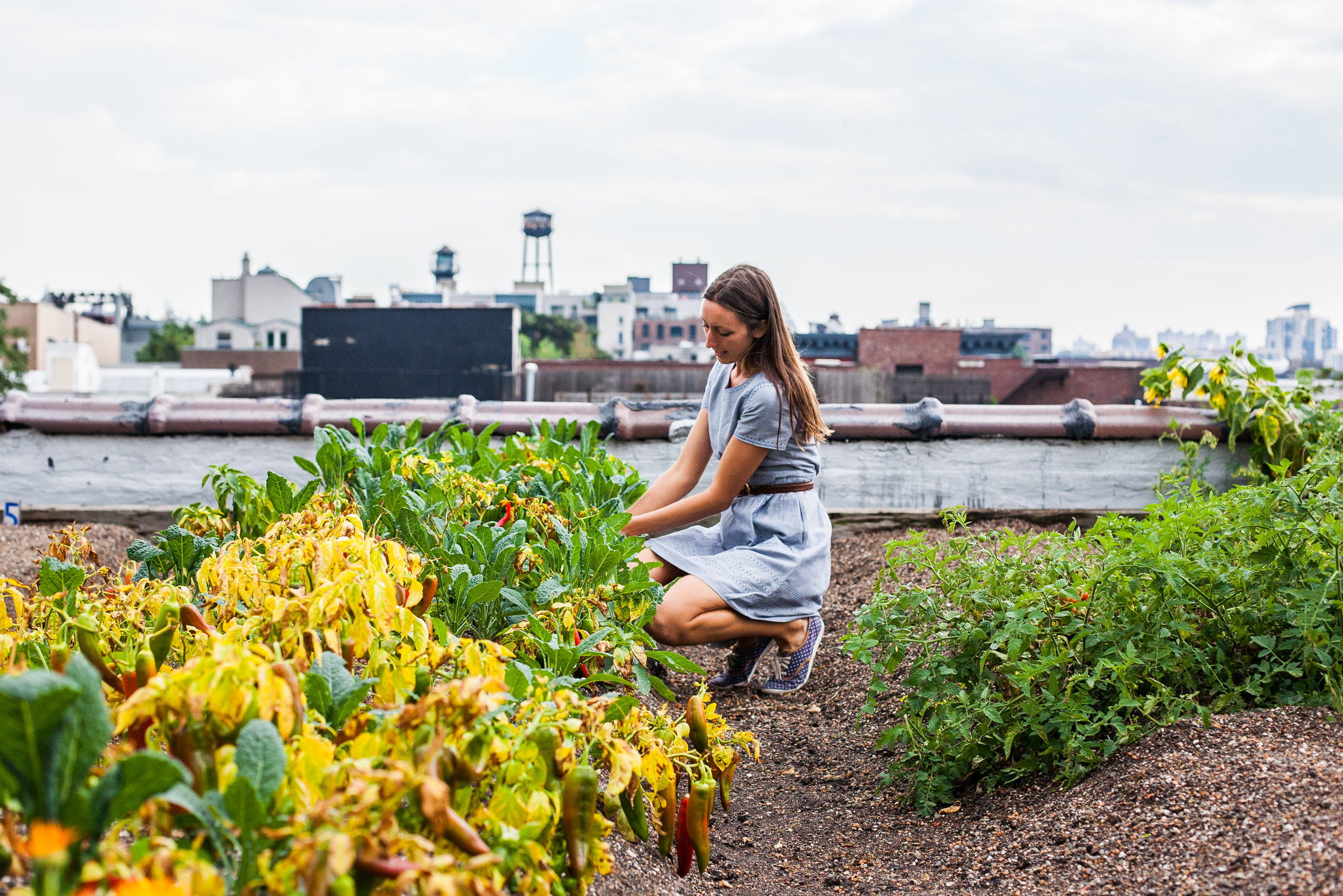Annie Novak, founder of Eagle Street Rooftop Farm