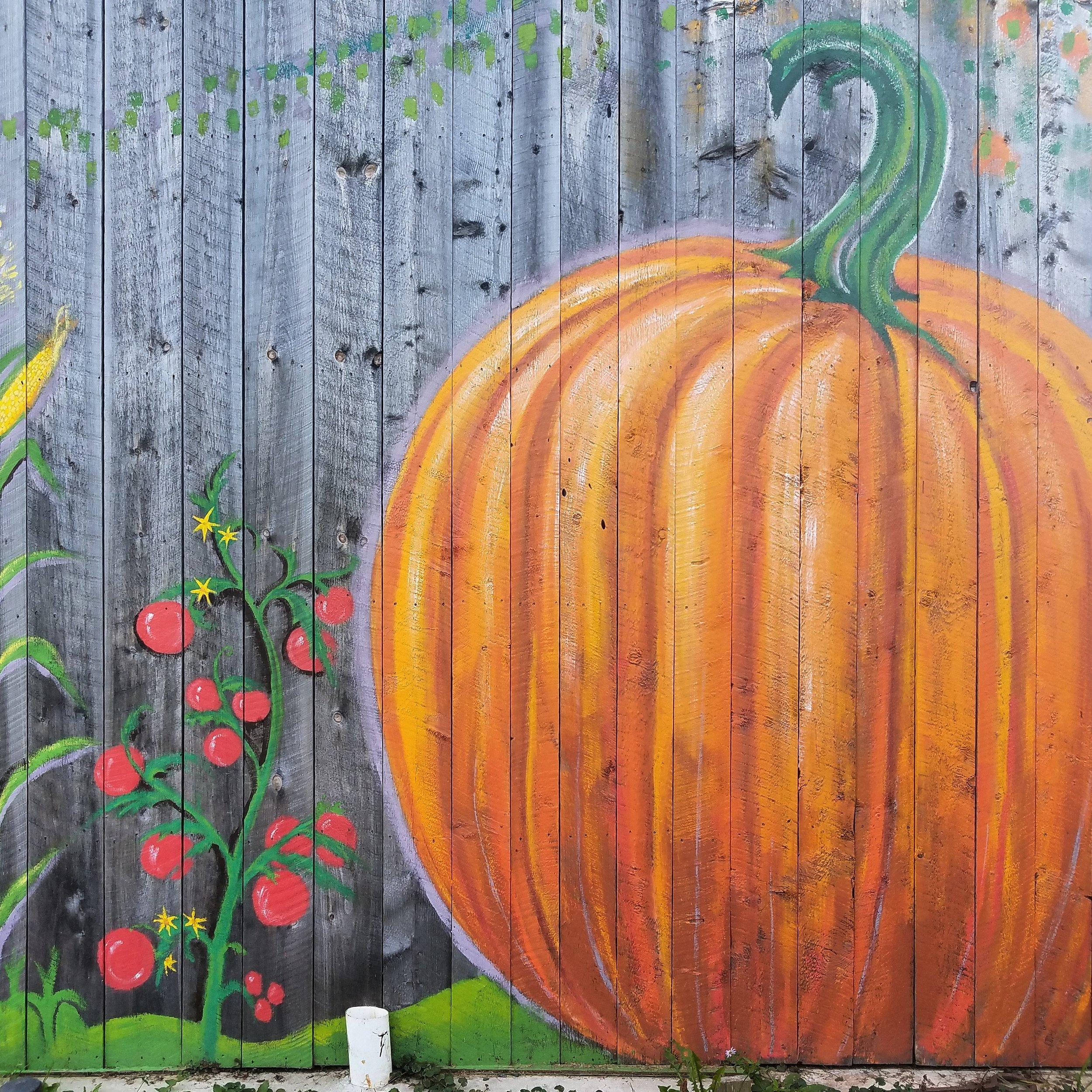 Pumpkins at Hartshorn Farm