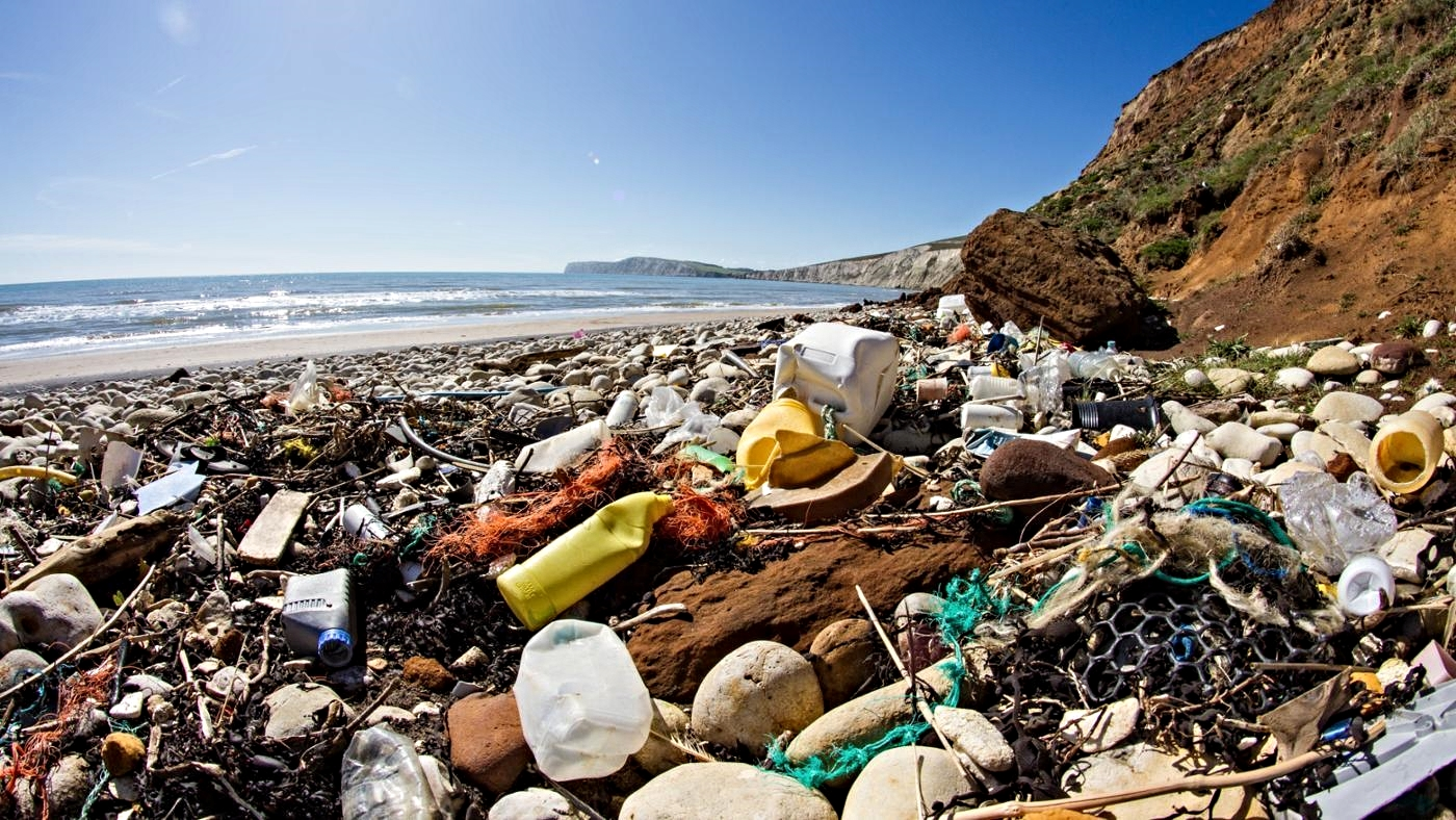 Plastic has infiltrated the ocean's ecosystem, from plankton to whales. -