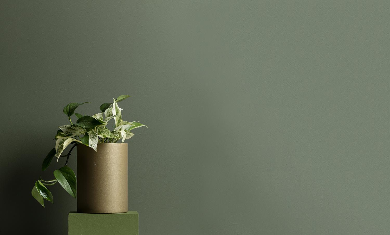Axolotl_green02.jpg
