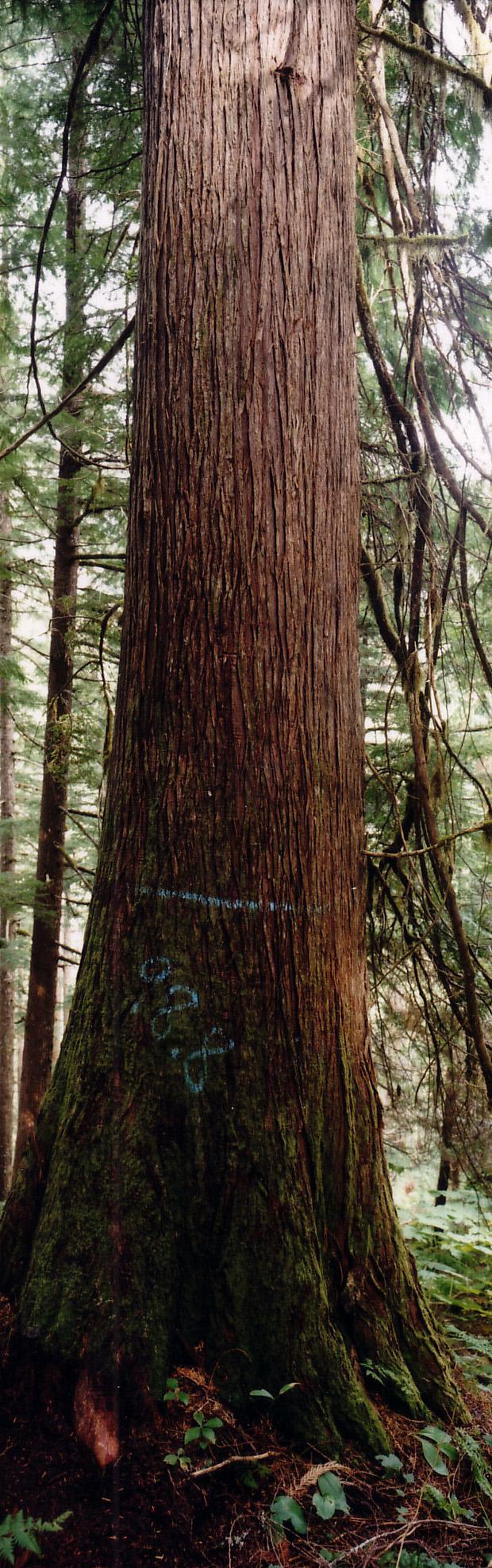 10. 98.8 Tree.jpg