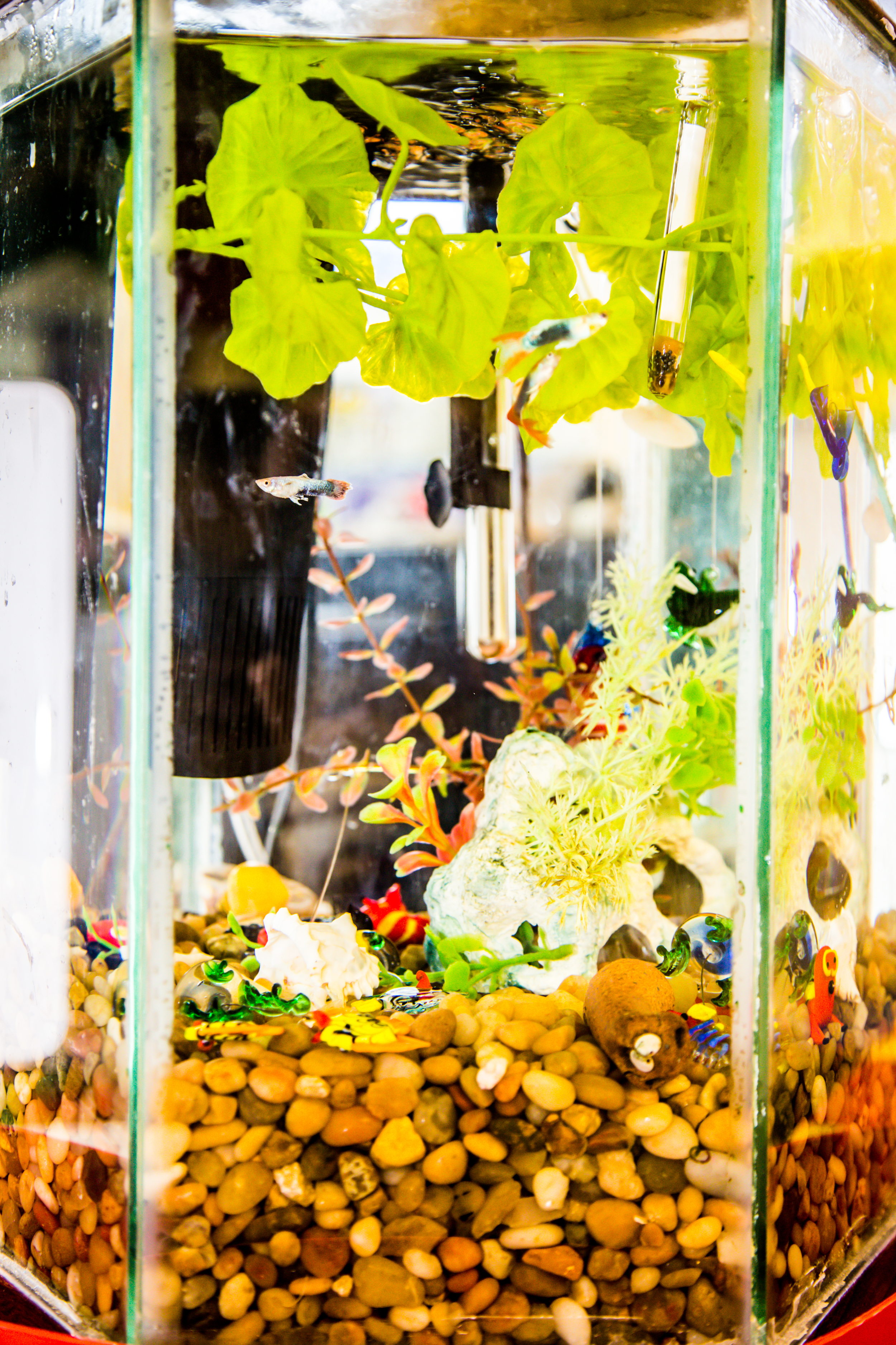 The science center hosts a colorful fish tank where children help with daily feeding and have a quiet moment of observation.