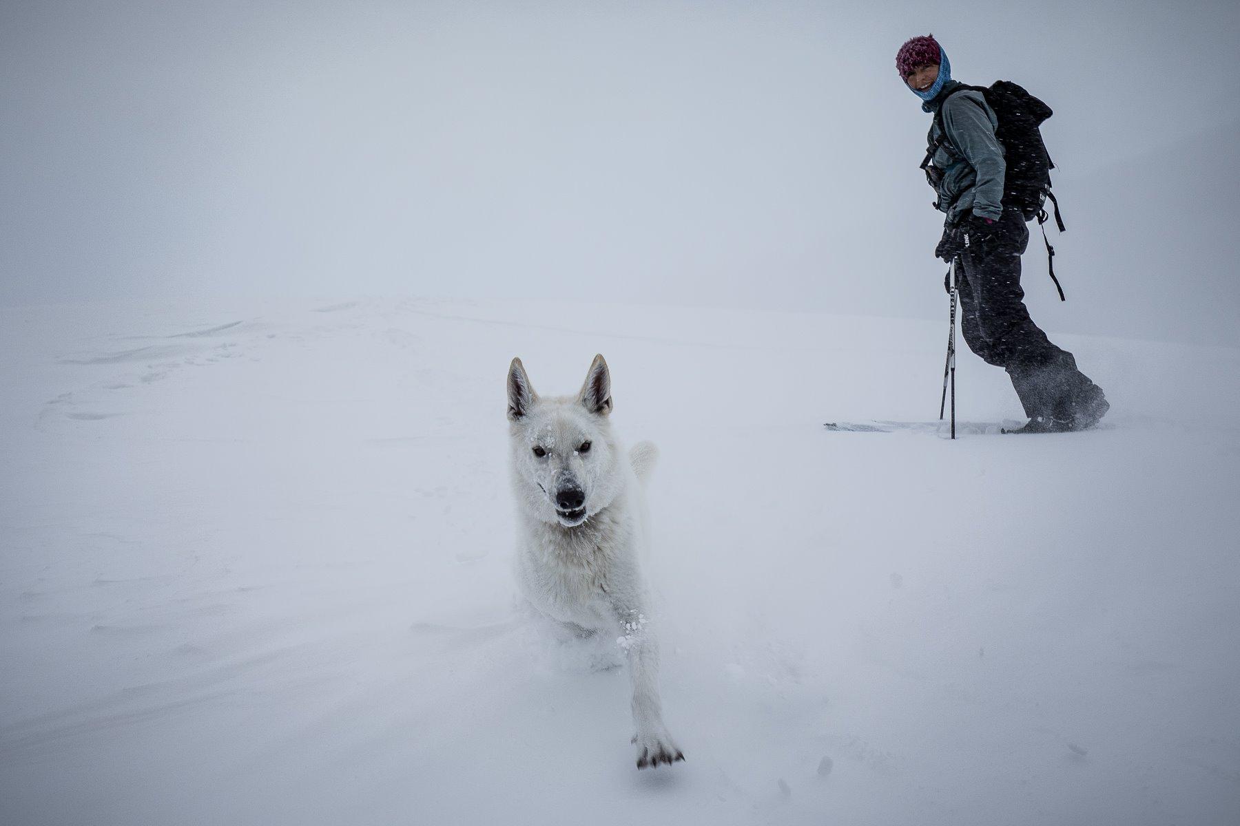 snow-skiing-swiss-shephard.jpg