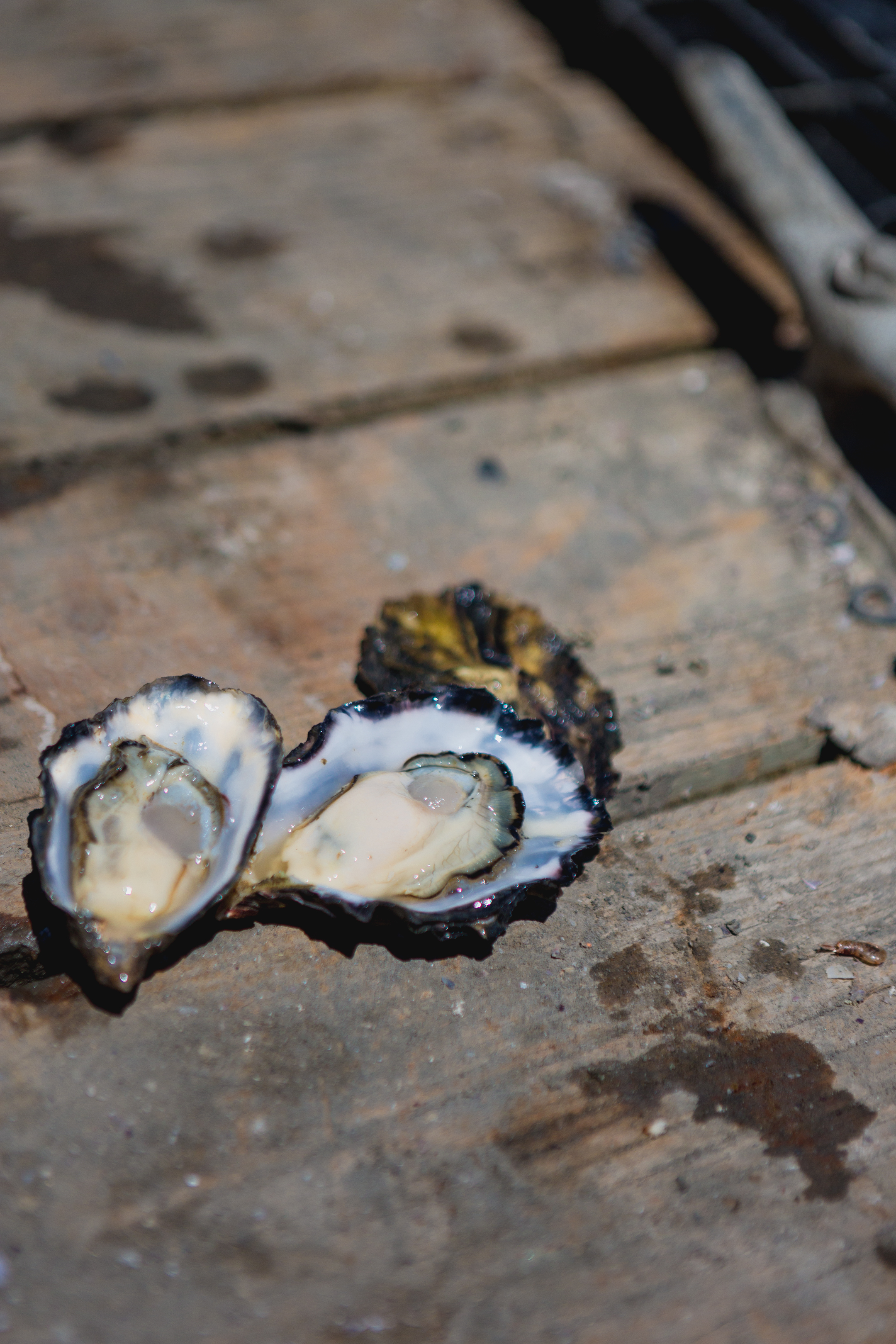 news-flavor-oysters (19 of 27).jpg