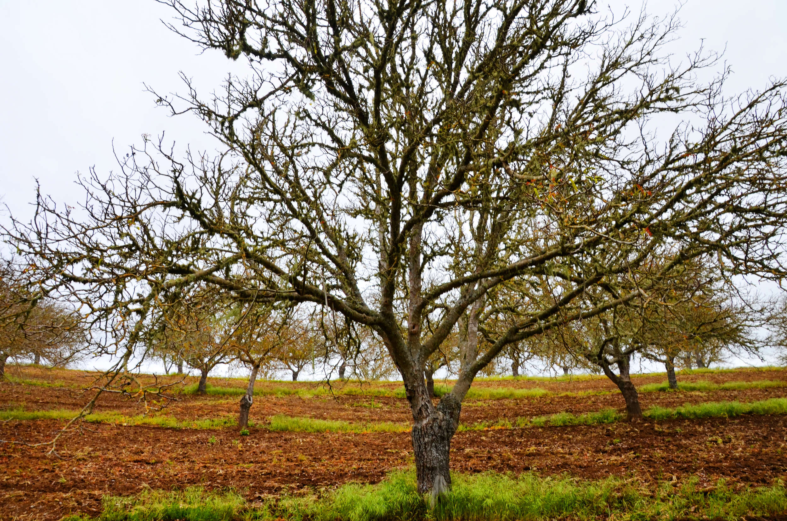 flavor-walnut-pic-3-28.jpg