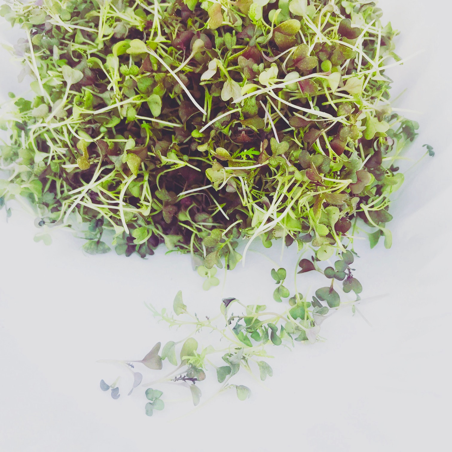 Flavor 2-8 Bloom Microgreens_pic8.jpg