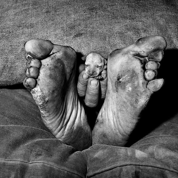 Puppy Between Feet -Roger Ballen