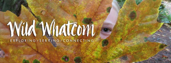Wild Connections - Fall 2016