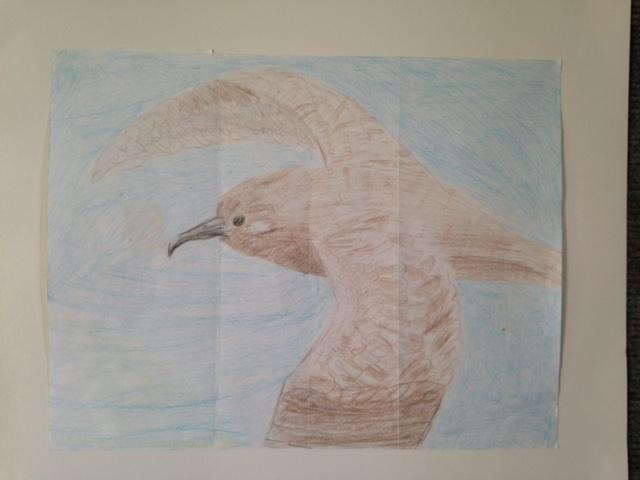 Second Place: Jaymie Kaluna-Kamai, 6th Grade, Waimea Canyon Middle School