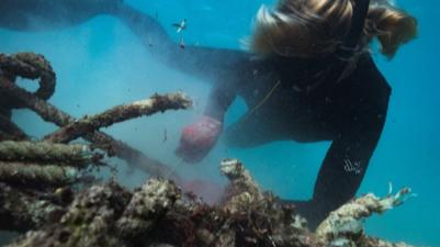 Marine Debris.png