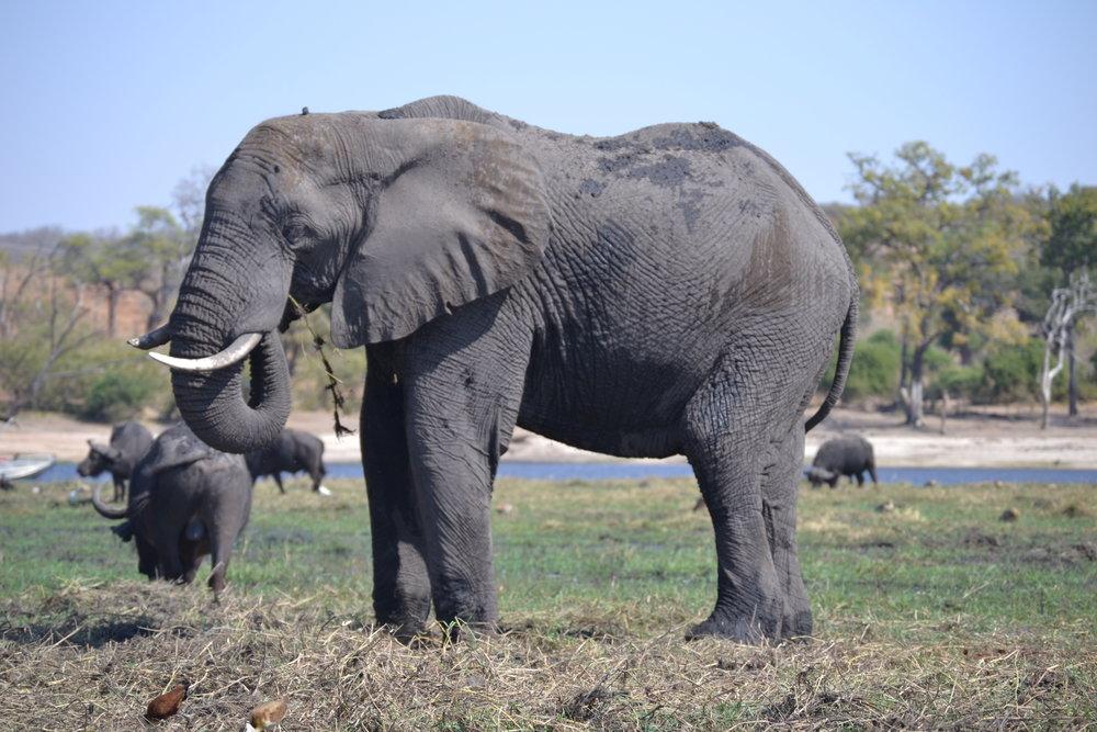 safari10.jpg