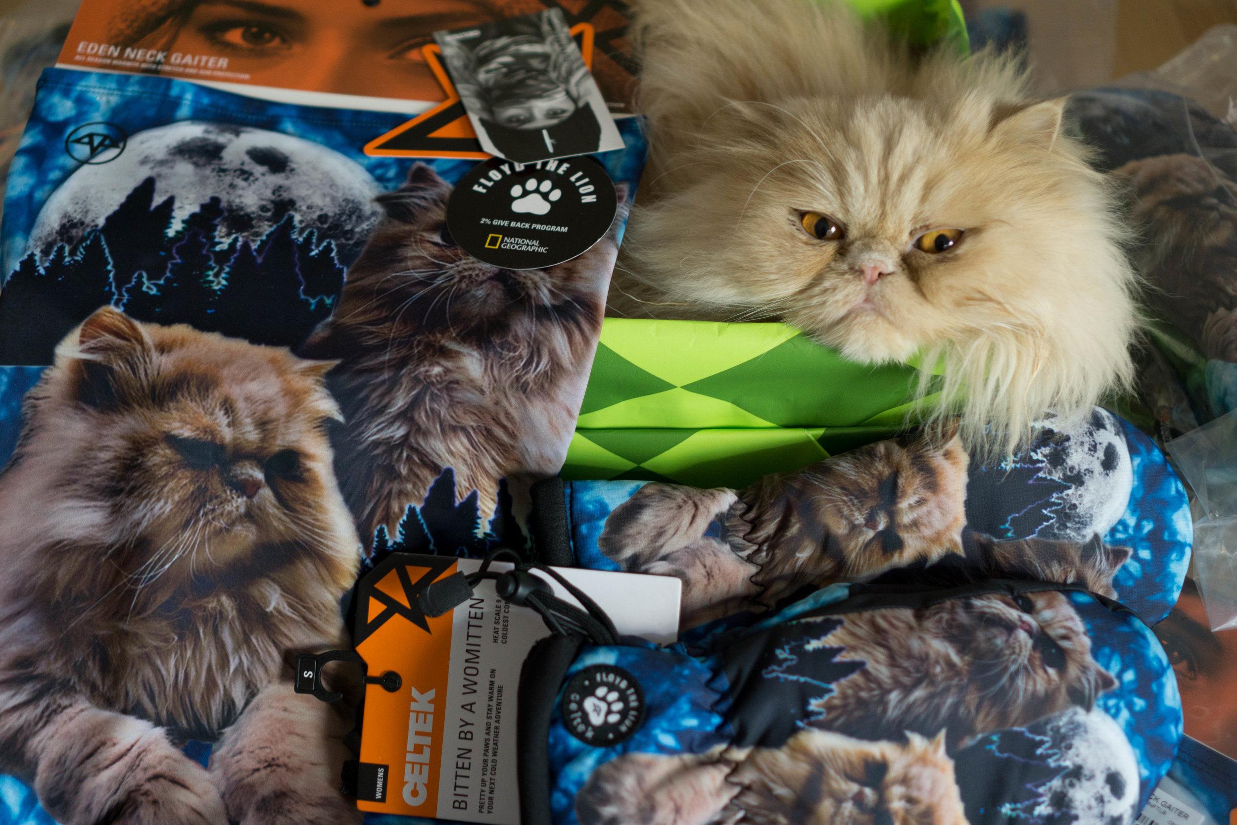 Floyd The Lion X Celtek
