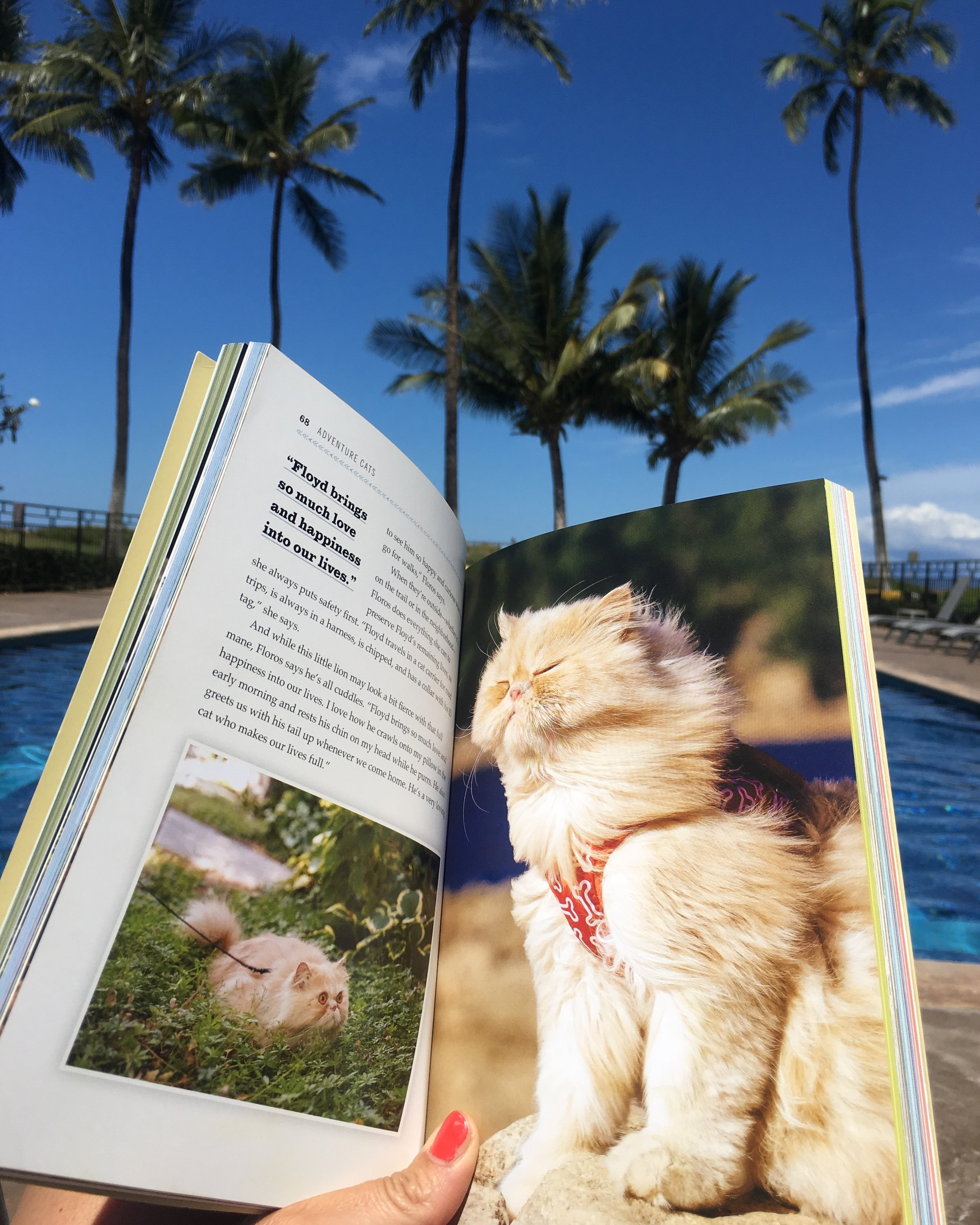 Living Nine Lives to the Fullest, the   Adventure Cats    book is pawsome & features yours truly!