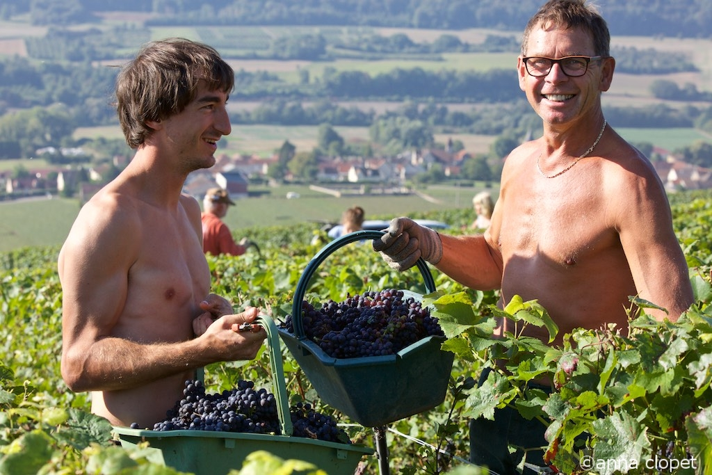 grape pickers at Alain Mercier