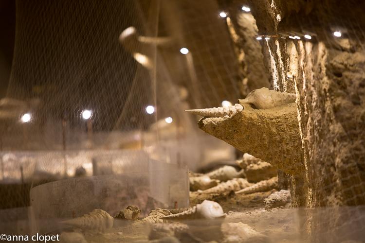 Cave aux coquillages