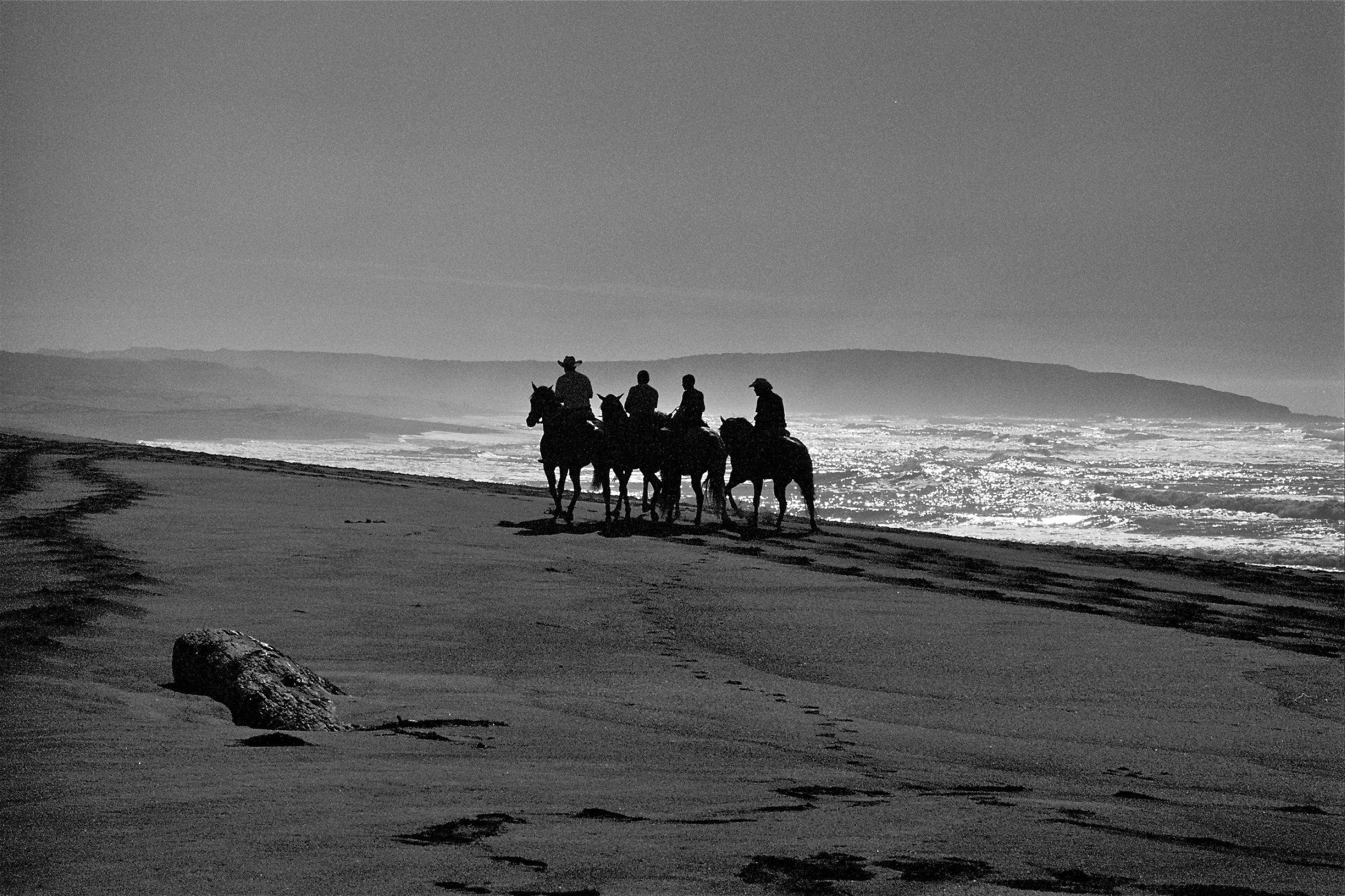 Horses on The Sonoma Coast