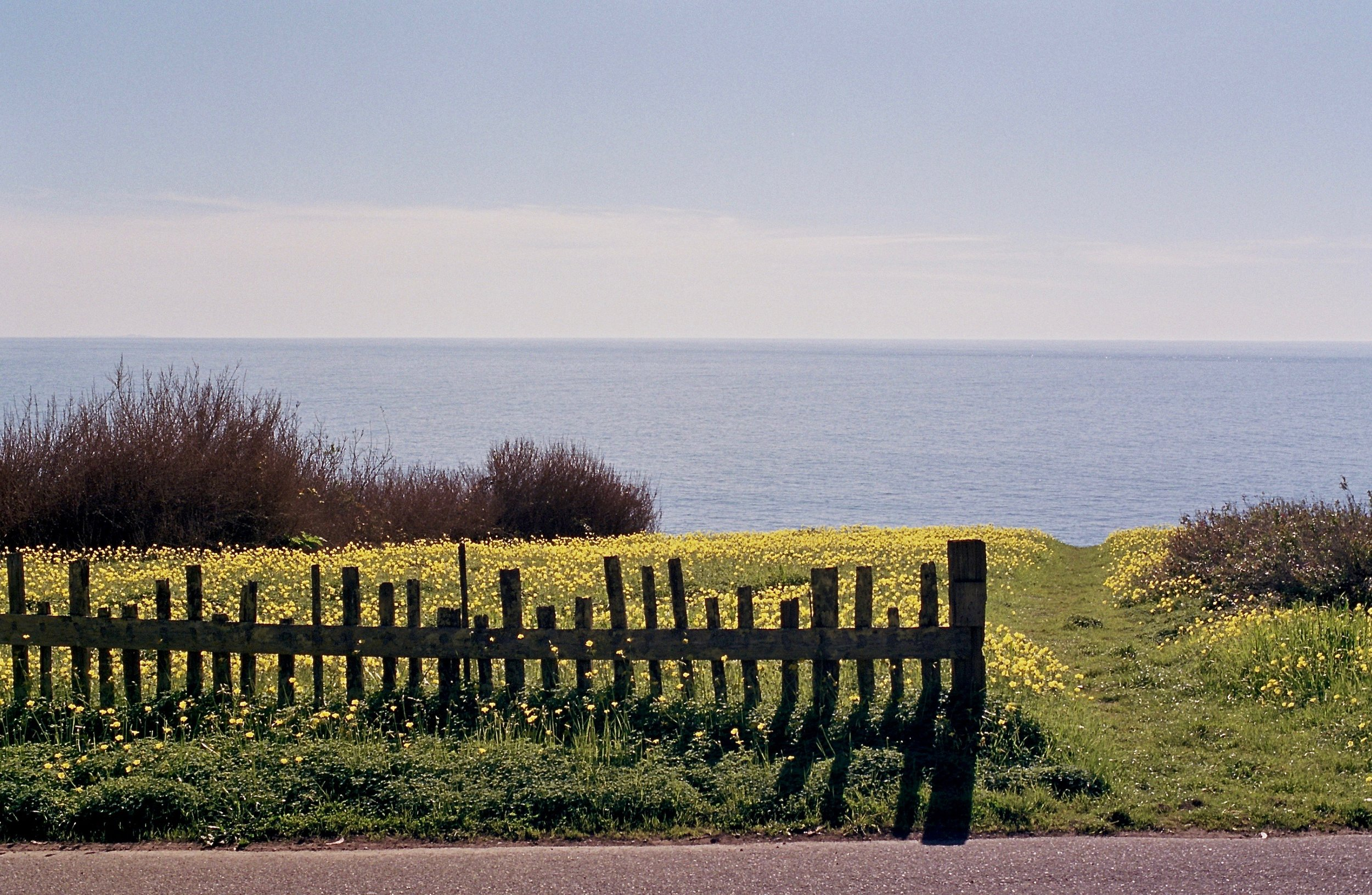 Fence and Path.jpg